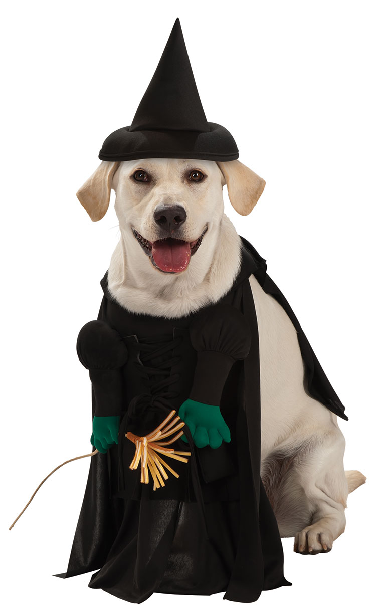 Wicked Witch Pet Costume